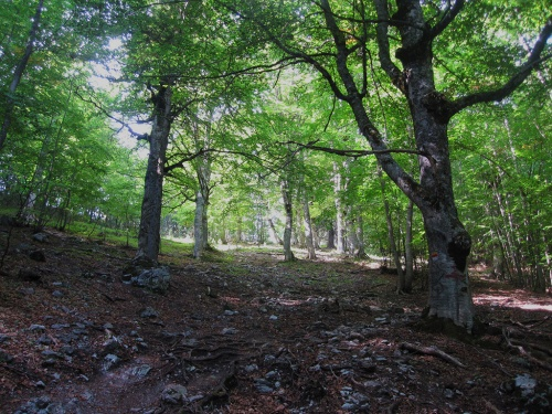 Left of the forest path between Mparmpas and Stragkos