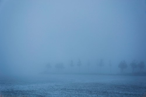 The road was just another 100m after the trees but impossible to see in the thick fog.