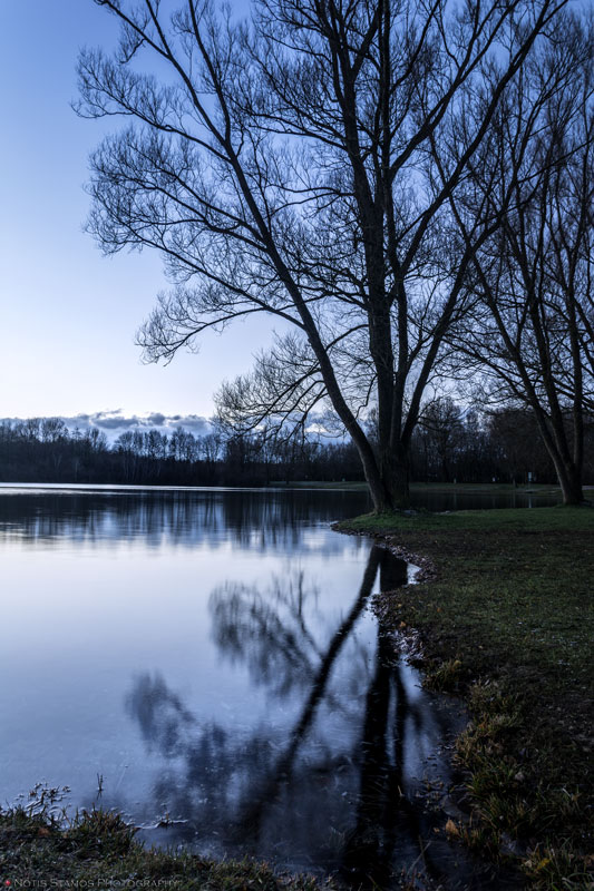 Tree - Lake reflection - Dawn
