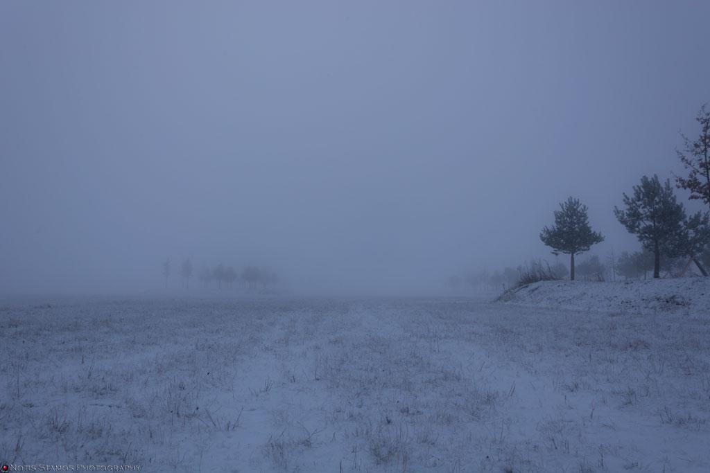 Misty-trees-1