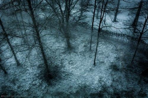 Fine art - Snow and trees - Notis Stamos