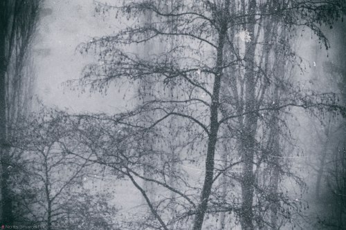 Blizzard snow storm trees