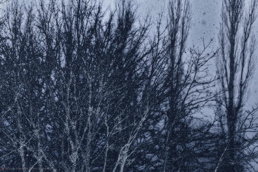 Fine art - Trees snow - Abstract - Notis Stamos