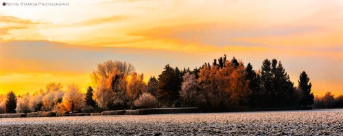 Golden frost - Notis Stamos - Munich