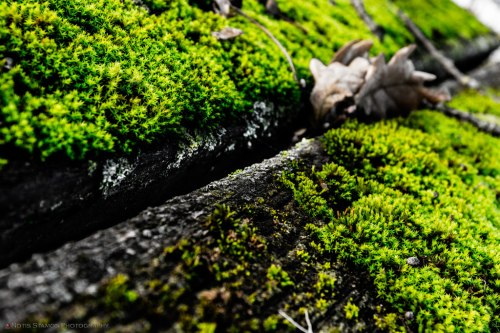 Moss on picnic table.