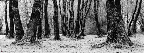 Frosty wood - Notis Stamos - Munich