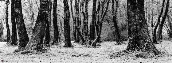 Frosty wood - Notis Stamos - Munich
