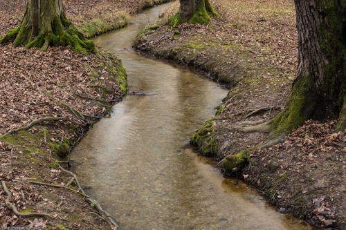 Creek, trees, Notis Stamos