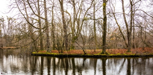 Island, Lake, Reflection, Trees, Winter, Nymphenburg, Notis Stamos