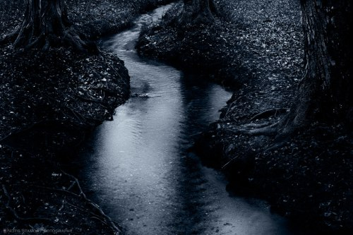 Moonlight, reflection, creek, Notis Stamos