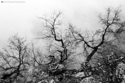 Reflection, trees, rocks, Nymphenburg, NOtis Stamos