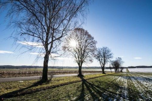 Sun star, trees, winter, snow , Notis Stamos