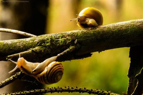 Snails, tree, Notis Stamos