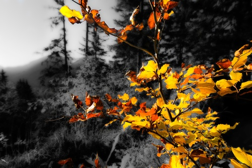 Yellow and Red leaves, Notis Stamos