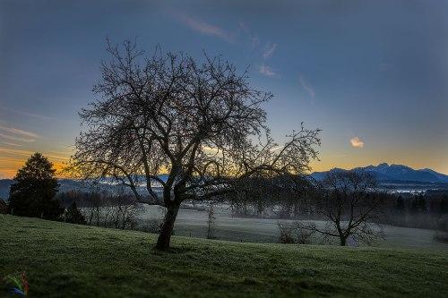Sunrise, dawn, tree, winter, alps, Bayern, Bavaria, Notis Stamos