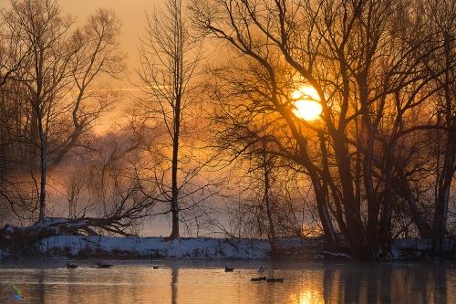 Sunrise, Notis STamos, Mittlere-Isar-Kanal, Geese, dawn, trees, sun, fog, mist