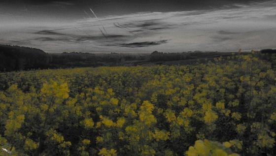 Sunrise, flowers, yellow, Notis Stamos