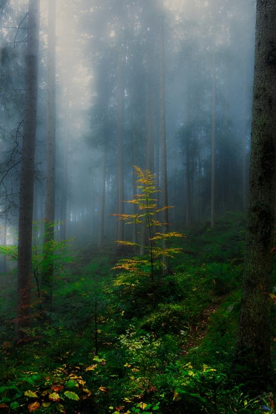 Forest, Autumn, Leaves, Trees, Notis Stamos