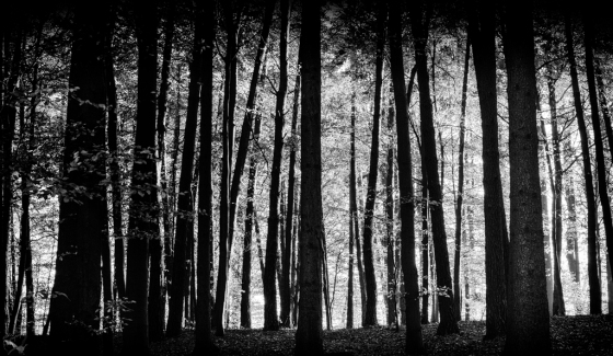 Forest, Trees, B&W, Notis STamos