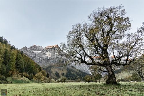 Tree, mountain, autumn, leaves, Notis Stamos