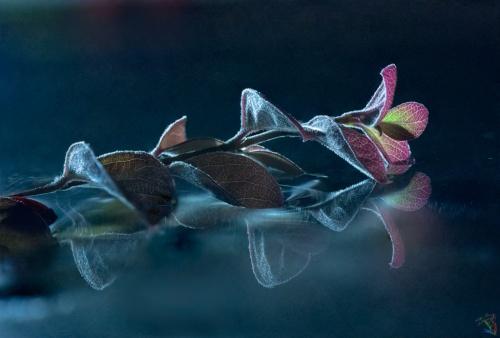 Branch, Water, Floating, Macro, Notis Stamos