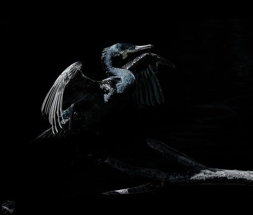 bird-notisstamos-1024-5