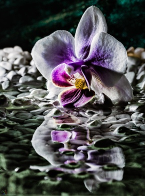 Macro, Flower, Rocks, Water, Notis Stamos