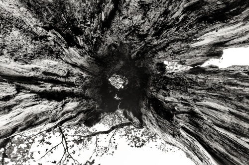 Tree trunk, Wood, B&W, Notis Stamos