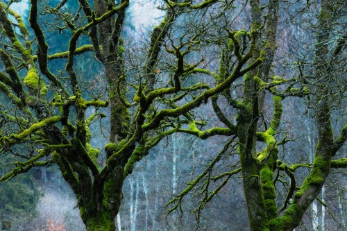 Moss, Branches, Green, Notis Stamos