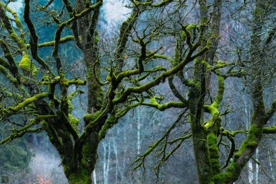 Moss, Branches, Green, Notis Stamos