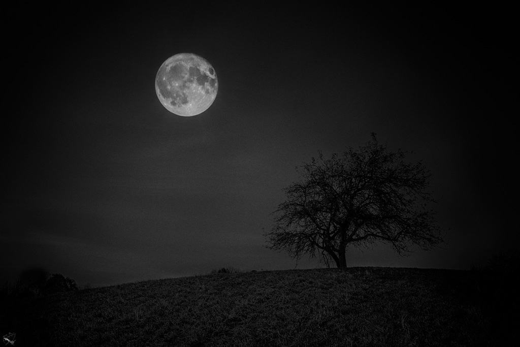 Moonlit tree, Moon, Moonlight, Notis Stamos