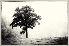 Rain, Tree, Notis Stamos, B&W