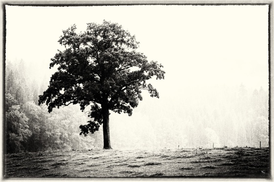 Rain, Tree, Notis Stamos, B&W