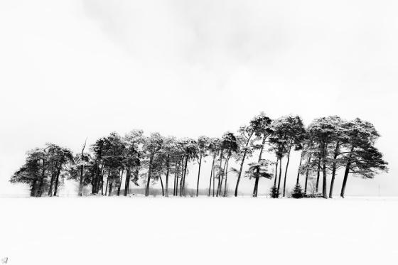 Snow, Thicket, Trees, Munich, Notis Stamos