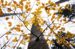 Autumn, leaves, Trees, Notis Stamos