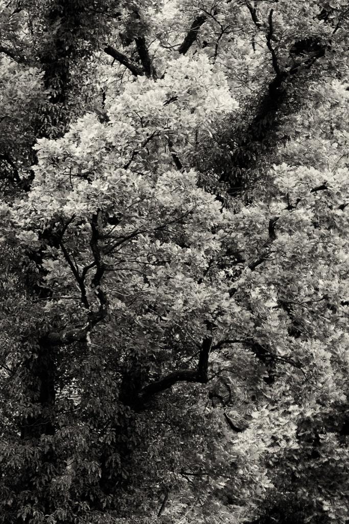 B&W, Autumn Trees Notis Stamos